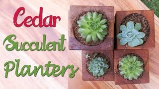 How to make Succulent Planters - Ep 005