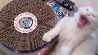 NOTHING will make you LAUGH HARDER than this - EXTREMELY funny CAT compilation