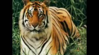 NLDS 2010 Bangladesh  Promo