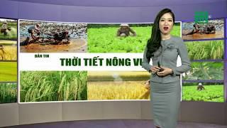 VTC14   Thời tiết nông vụ 05/02/2018   Bà con nông dân Nam bộ có thể yên tâm