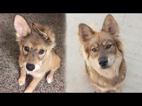 Xxx Mp4 My Dog S Breed Reveal DNA Test 3gp Sex