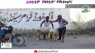 SHEEP THEIF PRANK  By Nadir AlI  Sanata In  P4 Pakao  2017 uploaded on 26-12-2017 17201 views