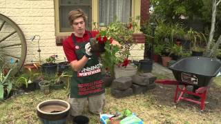 How To Repot A Plant - DIY At Bunnings