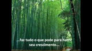 História do Bambu chinês