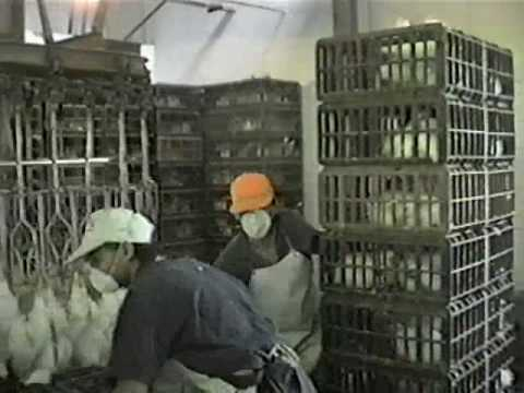 Matadero Slaughterhouse