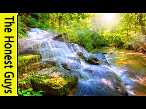8 HOURS Relaxing Nature Sounds Sleep Study Meditation Spa Water Sounds Bird Song