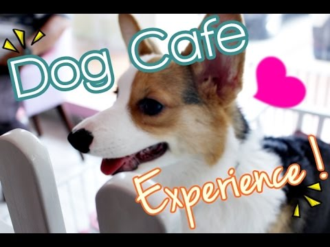 Paws and Tails Dog Cafe