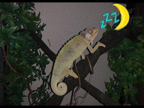 Xxx Mp4 Mis Reptiles Durmiendo CUARTO DE REPTILES 3gp Sex