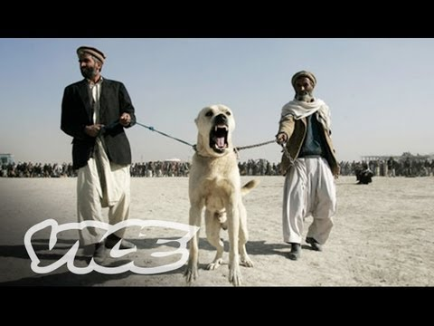 Underground Dog Fighting in Afghanistan Part 1 3