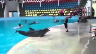بالفيديو : دولفين يخرج من المسبح ليلعب مع طفل