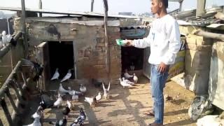 Pigeon.com