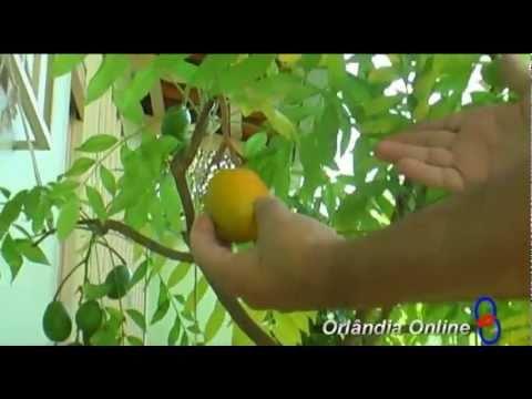 Árvores Frutíferas em Vasos ex vereador Biza Orlândia.