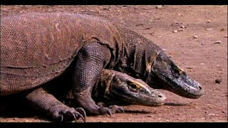 A Must watch Documanary - Mating - The science behaind the intercorese of  Animal world - in Tamil