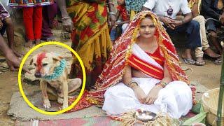 Top 10 Unbelievable People Who Married Animals - AllTimeTop