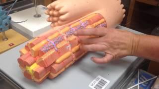 Cardiac muscle cell