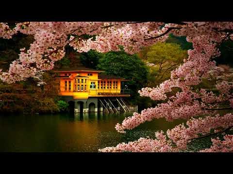 Zen Meditation Music | Japanese Flute Music | Relax, Meditation, Sleep, Ambience