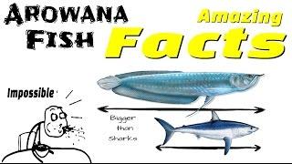 Amazing Facts of Arowana Fish
