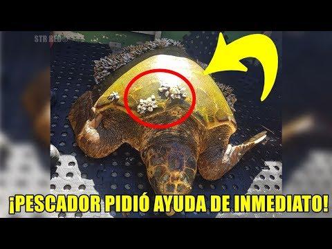 Un pescador encontró esta extraña tortuga al mirar su caparazón se dio cuenta de algo terrible