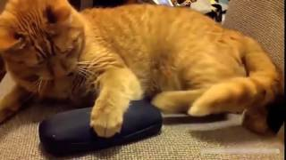 animal video funny , pets and baby - Part 9
