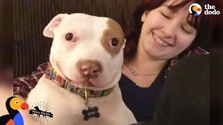 Pit Bull Dog Makes His Family Whole Again - BEAU   The Dodo Pittie Nation