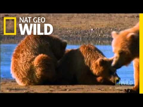 Xxx Mp4 Saving Cubs From Their Dads Nat Geo Wild 3gp Sex