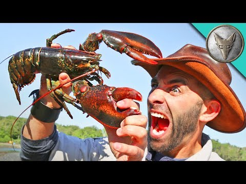 Xxx Mp4 PINCHED By A LOBSTER 3gp Sex