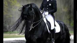 KFPS Approved Friesian Stallion Alert 475 Sport!