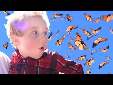watch Birthday Party w/ a THOUSAND live BUTTERFLIES!