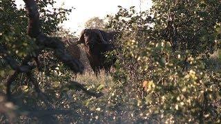 Limcroma Safaris - hunting dangerous game