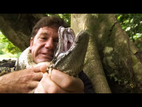 Strangled by a Boa Constrictor Deadly 60 Series 2 BBC