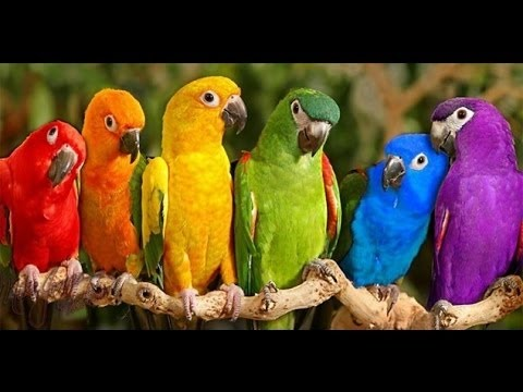 Xxx Mp4 Parrots Majestic Birds Nature Documentary HD 3gp Sex