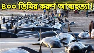 করুণ ঘটনা , ৪০০ তিমির একই সাথে আত্মহত্যা || Freaky News