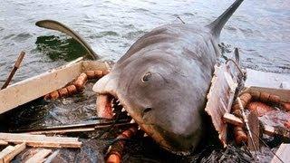 Les Dents de la Mer (1975) Bande Annonce HD