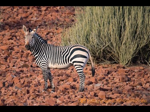 Xxx Mp4 Safari Travel Photography TIPS Long Lens Shooting In Africa With Tamron 150 600mm 3gp Sex