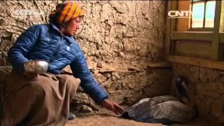 أفلام وثائقية: سقف العالم - رفاق الحياة