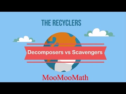 Decomposers vs Scavengers
