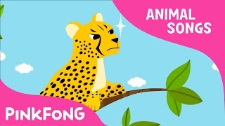 Cheetah Bang Bang | Cheetah | Animal Songs | Pinkfong Songs for Children