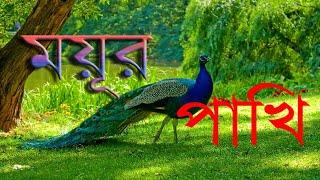 ময়ূর পাখি  HD !   Bangladeshi Blue Peacock