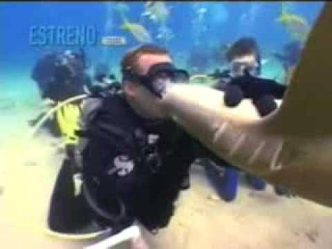 Sorprendente por besar a tiburon recibe un mortal mordisco beso