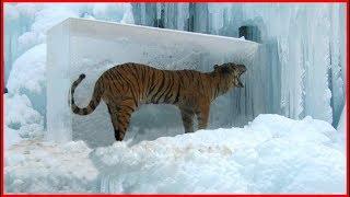 7 Animales Atrapados en el Hielo