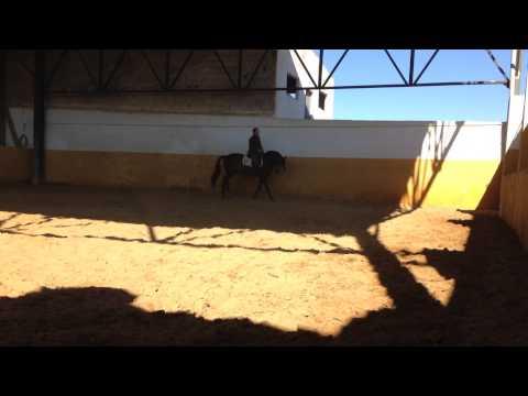 caballo bayo roman