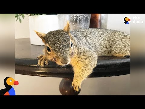 Xxx Mp4 Woman Rescues Baby Squirrel — Then Becomes A Complete Squirrel Mom The Dodo 3gp Sex