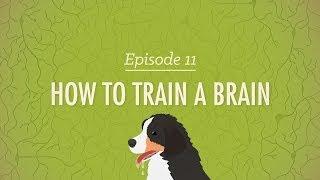 How to Train a Brain - Crash Course Psychology #11