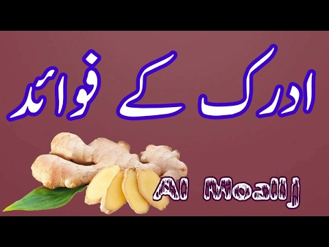 Adrak Ke Fayde Ginger Benefits Adrak Ke Fawaid ادرک کے فائدے by Al Moalij In Urdu Hindi youtube