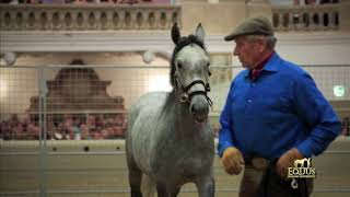 Monty Roberts at the Spanish Riding School 2017