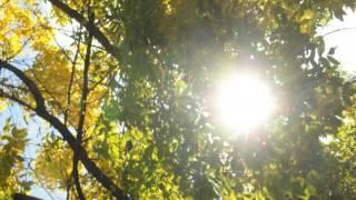 Shayari - Sunti rahi uski karaahon ko