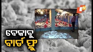 Bird flu situation remains grim in Puri