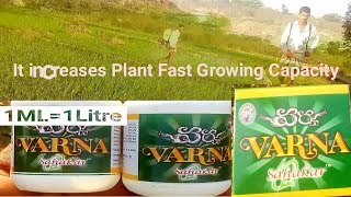 Best Paddy,Chillies, cotton and Vegetable Plant Protection Fertilizer | It controls Insecticide