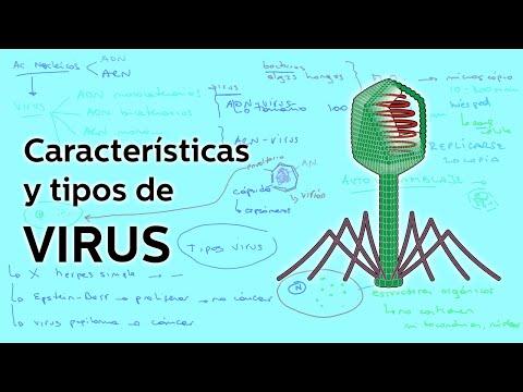 Características y tipos de Virus Biología Educatina