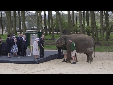 Xxx Mp4 Pleased To Meet You Ma Am The Queen Plays With ELEPHANTS On Zoo Visit With Prince Philip 3gp Sex